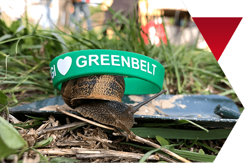 GREEN BELT DAY 2017